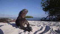 Galapagos, un paradiso per pochi. È guerra al turismo di massa