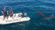 Agenti inseguiti da un enorme squalo bianco: l'incontro ravvicinato da brividi