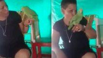"""La padrona lo """"sgrida"""", il pappagallo scoppia a piangere come un neonato"""