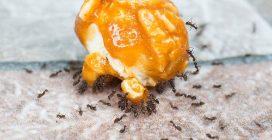 6 rimedi naturali per allontanare le formiche in casa