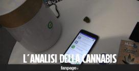 La macchina che analizza la cannabis in 60 secondi