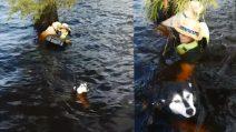 Finisce in mare con i suoi due cani, rischiando di annegare: le immagini del salvataggio