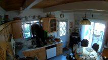 Un intruso entra nella loro casa: ma il ladro non è un essere umano