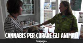 """La cannabis per curare gli animali: """"Funziona e non dà effetti collaterali"""""""
