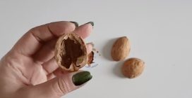 How to reuse walnut shells to make a beautiful Christmas decorations
