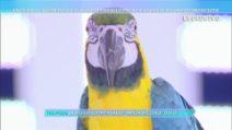 """Enzo Salvi: """"Quando il mio pappagallo Fly è stato aggredito, ho subito un forte trauma"""""""