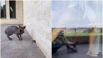 Topo in casa di Ilary Blasi e Francesco Totti, l'esilarante scena della conduttrice che scappa