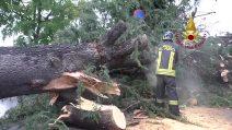Maltempo su Milano e l'hinterland, grosso albero caduto a Rozzano