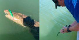 Va a pesca e abbocca un coccodrillo: cosa accade all'uomo
