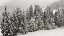 Nevica a Falcade, lo scenario è da incanto