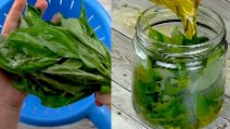3 tips for preserving fresh basil all year long!