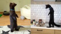 """Lo """"strano"""" animale domestico che si alza su due zampe: non si tratta di un gatto"""
