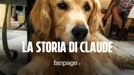 Il cane Claude aveva poche speranze di vita, 2 anni dopo festeggia la fine delle cure per il tumore