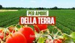 Cos'è la Produzione Integrata, la scelta d'amore degli agricoltori Mutti per un pomodoro di qualità