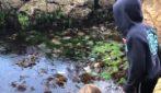 Bambina di 11 anni salva uno squalo intrappolato tra le rocce per la bassa marea