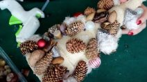 How to make a Christmas tree with dried fruit shells