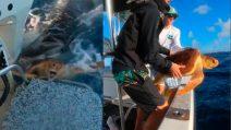 Due uomini salvano una tartaruga dalle fauci di uno squalo tigre affamato