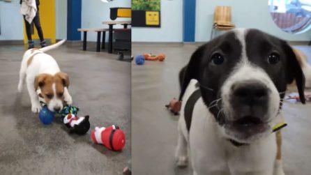 """""""C'è una sorpresa anche per voi"""", cani abbandonati scelgono il loro regalo di Natale"""