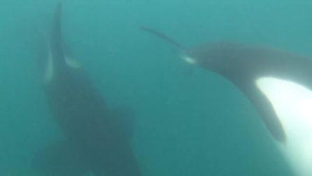 Si ritrova circondato da un branco di orche: quello che succede è incredibile