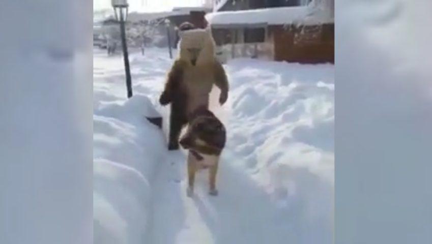 Cane con un grosso pene