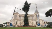 A Roma torna Spelacchio: in piazza Venezia arriva l'albero di Natale