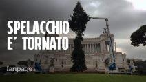 Roma, Spelacchio torna in piazza Venezia. E c'è chi lo critica (ingiustamente) per i rami spezzati