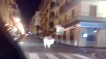 Salerno, una mucca si aggira tra le automobili