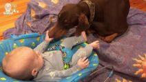 La madre lascia il cane da solo con il piccolo figlio: la scena ripresa col cellulare