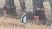 Ondata di caldo record, il koala è assetato: il gesto altruista della donna