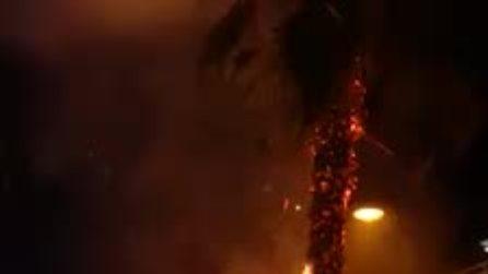 Napoli, cassonetti e alberi in fiamme a causa di un petardo a Secondigliano