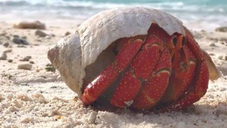 Si sveglia sulla meravigliosa spiaggia: la natura vista da vicino