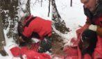 L'orso è rimasto orfano e si rifugia nell'albero: i soccorritori provano a salvarlo