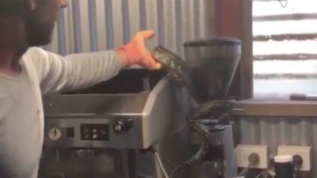 I proprietari del bar aprono la macchinetta del caffè: la sorpresa spaventosa