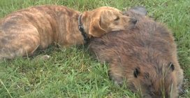 Il suo amico è morto ma il cane non riesce ad abbandonarlo e gli resta accanto
