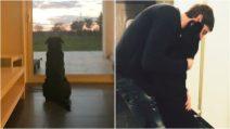 Emiliano Sala, il cane Nala aspetta ancora il calciatore scomparso