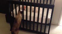 Il gattino veglia sul suo padroncino: i genitori filmano la scena tenerissima
