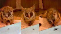 Le mosche passano sullo schermo: la reazione dellì'animaletto quando capisce che non sono vere