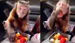 La scimmietta golosa in auto: alla vista della frutta non resiste