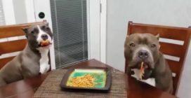 I cani approfittano della distrazione del padrone: reazione esilarante quando vengono scoperti