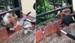 Gattino resta incastrato, c'è da ricorrere a una soluzione estrema per salvarlo