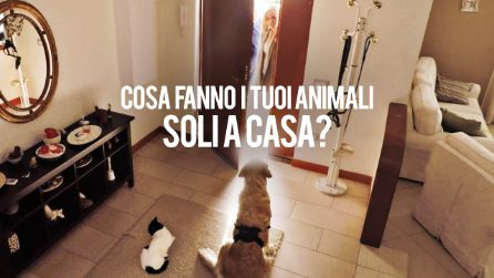 Vi siete mai chiesti cosa fanno i vostri animali domestici quando sono soli a casa?