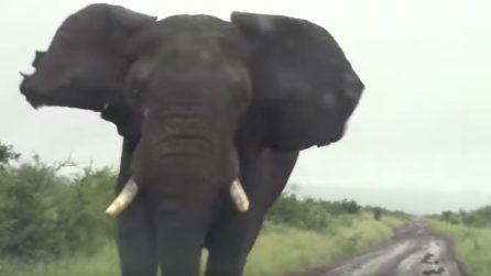 Turisti troppo vicini infastidiscono l'elefante: il grosso animale parte alla carica contro di loro