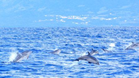 """Il gommone è """"circondato"""" dai delfini: le straordinarie immagini delle stenelle striate alle Azzorre"""