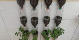 Vertical bottle garden in your home: a beautiful way to recycle them