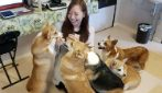 Corgi cafe: a dog lover's dream!