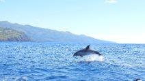 Balene, delfini e paesaggi da sogno: le meravigliose immagini delle Azzorre