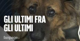 Il Sentiero di Ares, dove i cani malati terminali trovano finalmente una famiglia
