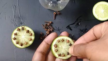 Repellente naturale contro le zanzare: ecco come prepararlo