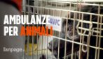 "Le ambulanze veterinarie: ""Pronto intervento per gli animali domestici 24 ore su 24"""