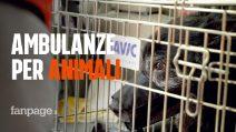 """Le ambulanze veterinarie: """"Pronto intervento per gli animali domestici 24 ore su 24"""""""
